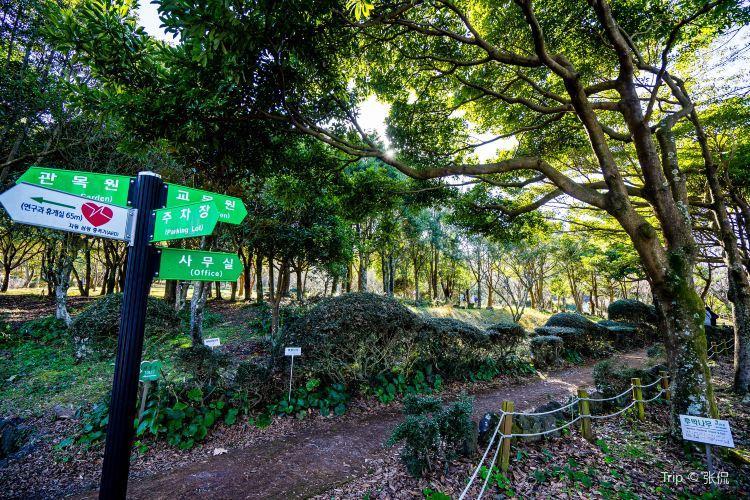 Halla Arboretum1