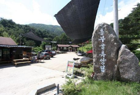 興夫谷自然休養林