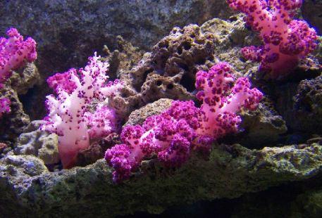 徐聞珊瑚礁自然保護區