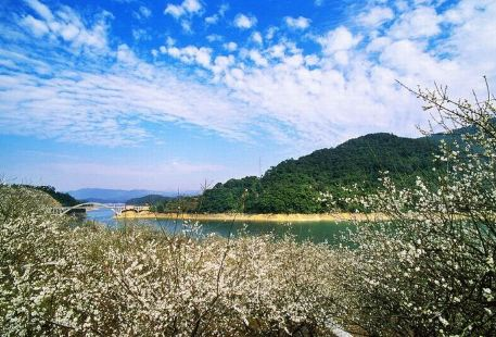 董寨國家級自然保護區