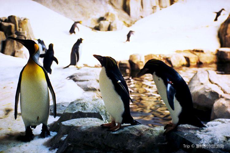 蒙特利爾自然生態博物館4