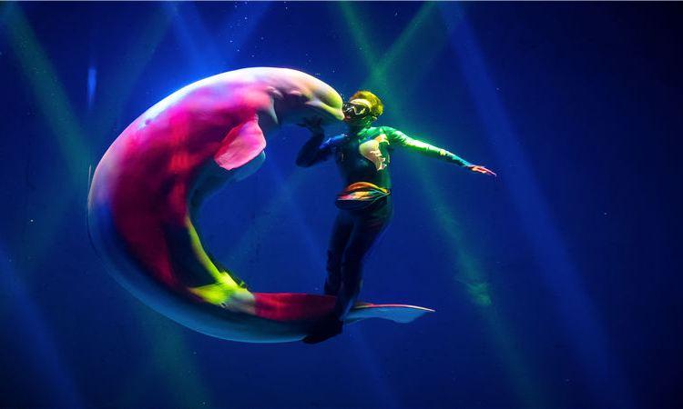 新華聯大白鯨海洋公園3