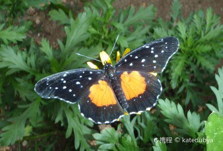 Butterfly The Cocora. (Mariposario El Cocora.)