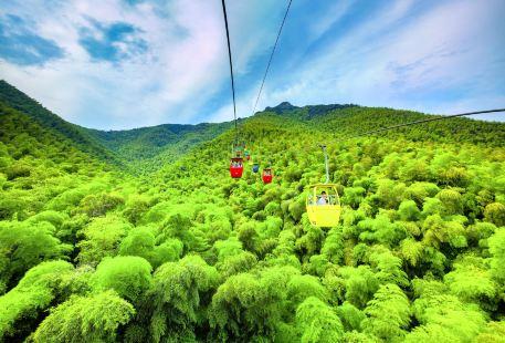 Nanshan Bamboo Sea
