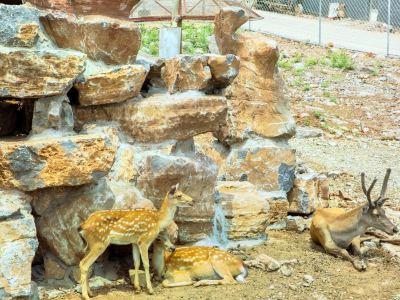 Baoshan Front Wildlife Park