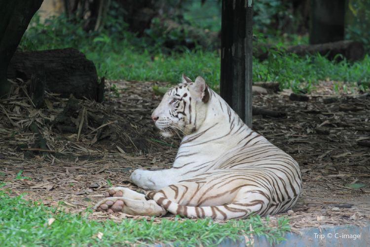 馬來西亞國家動物園1