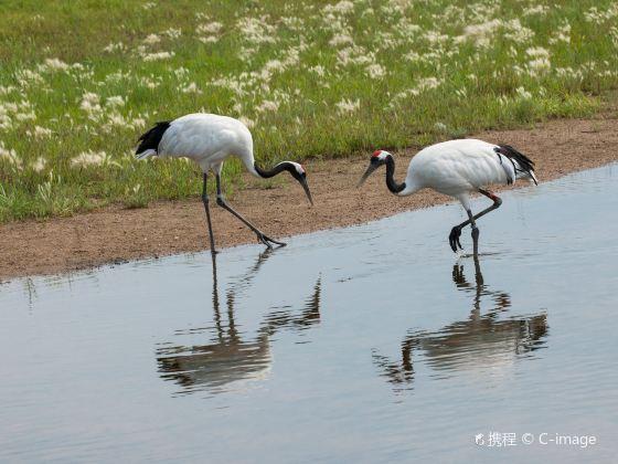 Zhalong Nature Reserve