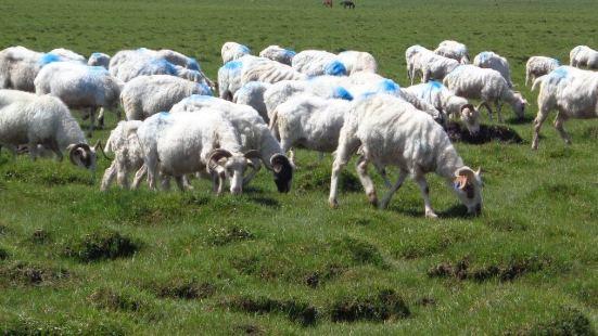 羊肉王飯店