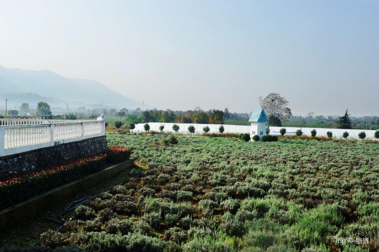 Qujiang Lavender Garden1