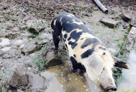 Dwyfor Ranch Rabbit Farm and Animal Park