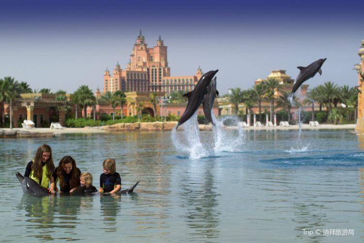 Dolphin Bay1