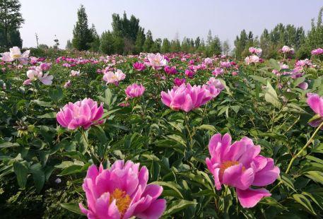 薛國百花園
