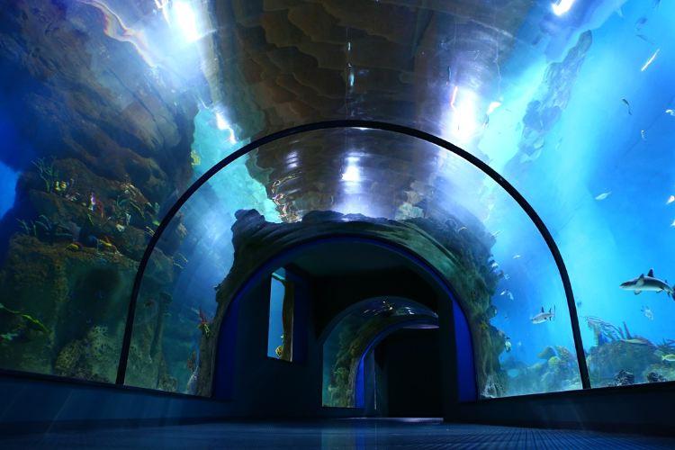 Moscow Oceanarium aka Moskvarium4