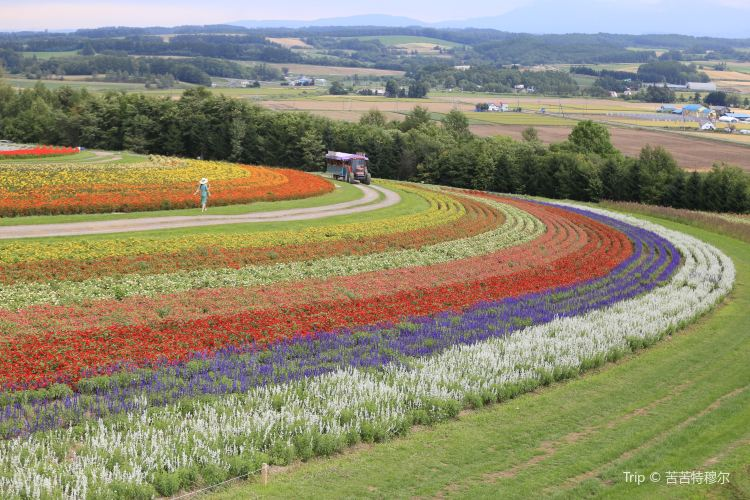 Flower Land Kamifurano1