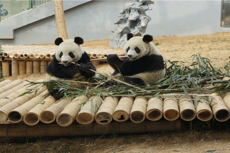 다롄 삼림동물원(대련 삼림동물원)1