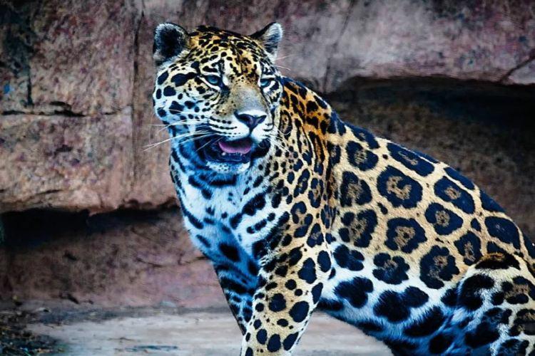 Changsha Ecological Zoo2