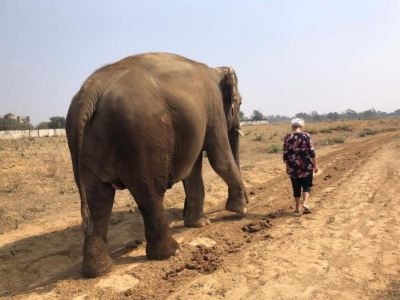 大象奇跡觀光農場