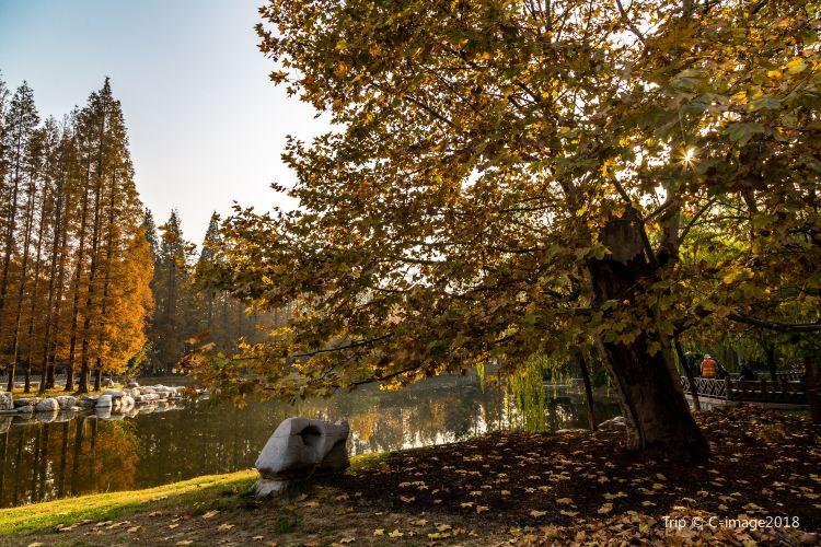 중산 공원4