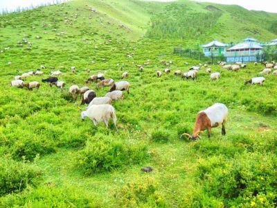 Dangzhou Grassland