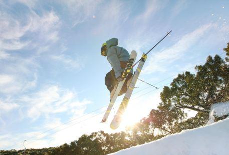 寶寶山滑雪場
