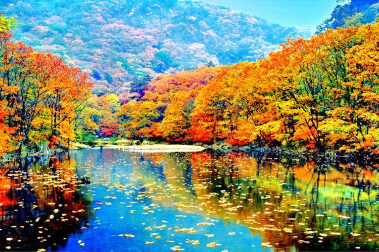 蒲石河森林公園