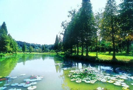 良鳳江國家森林公園