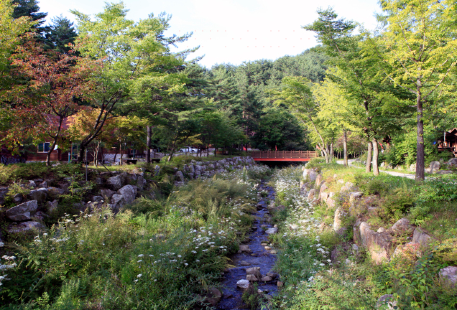 Taebaek Highland Natural Recreational Forest