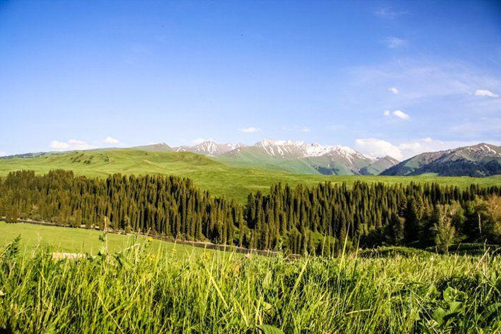 唐布拉草原2