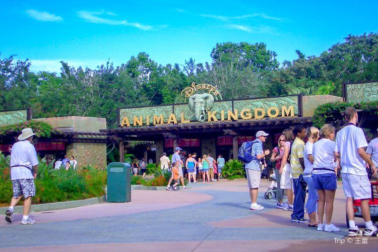 Disney Animal Kingdom1
