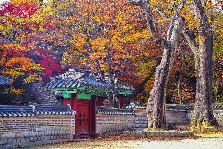 Changdeokgung Palace4