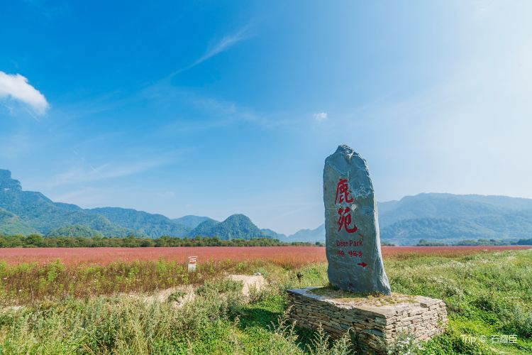 大九湖國家濕地公園1