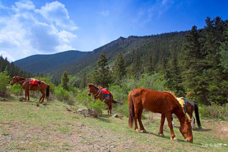 Helan Mountain National Forest Park1