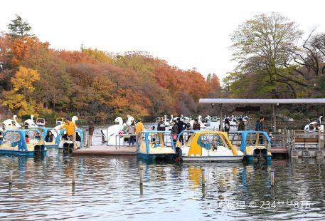 Inokashira Pond Boat Noriba