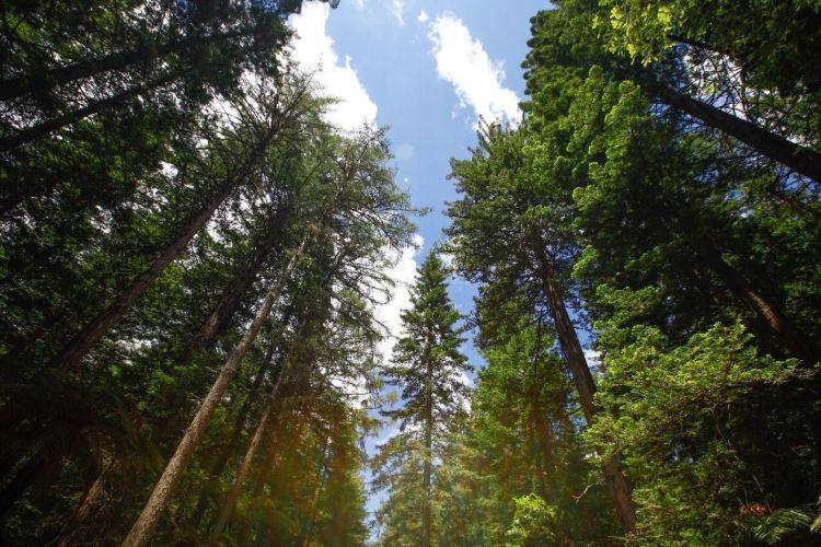 紅木森林公園2