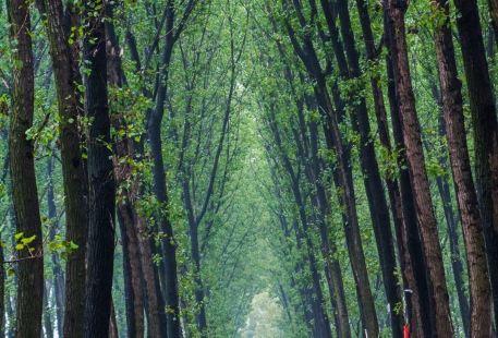 Shangqiu Huanghegudao National Forest Park
