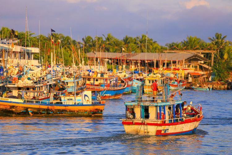 Negombo Central Fish Market4