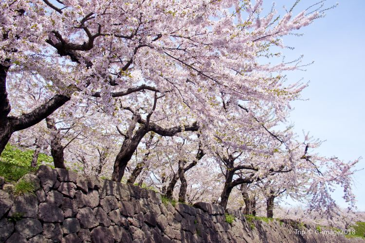 마루야마공원1