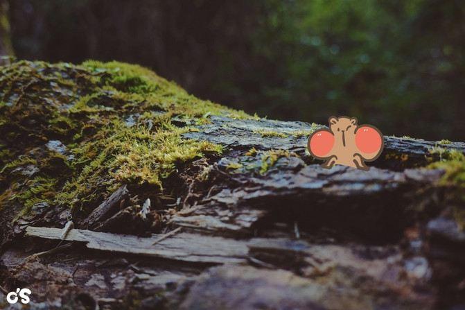 千島湖風景區-天嶼明珠觀島公園1