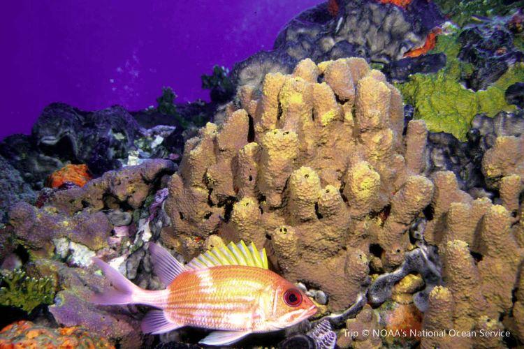 Flower Garden Banks National Marine Sanctuary2