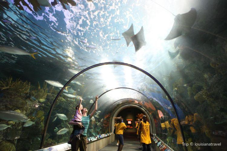 Audubon Aquarium of the Americas4
