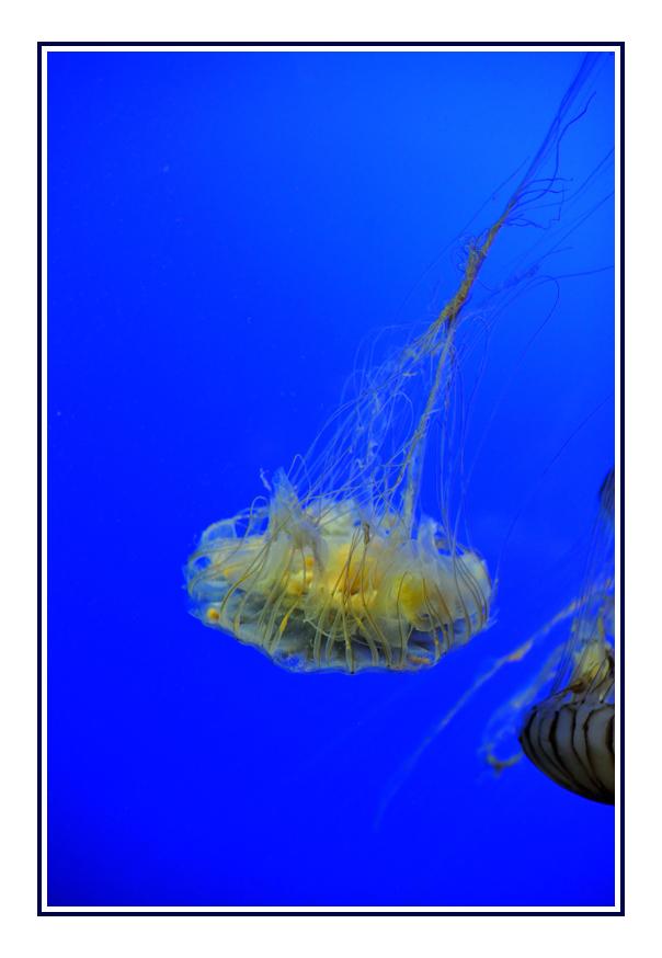 拉羅謝爾水族館