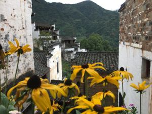 Wuyuan,Recommendations