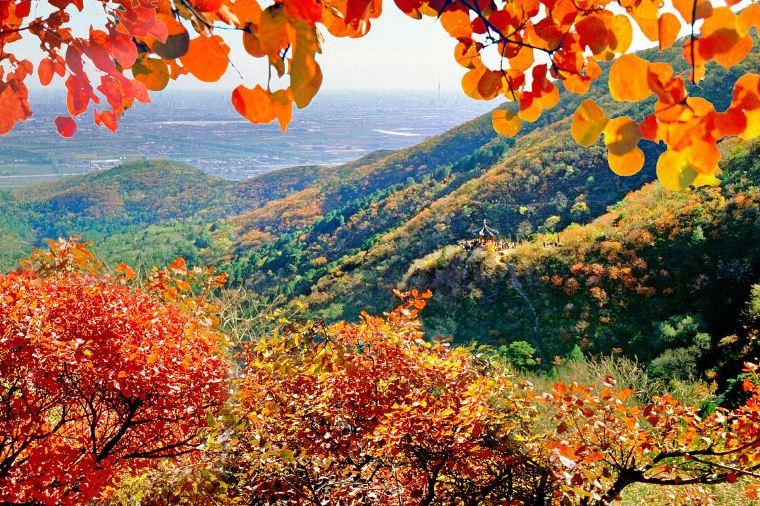 Fragrant Hills Park Autumn Foliage