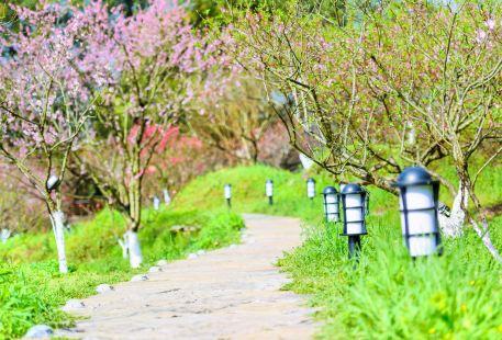 The Land of Peach Blossom