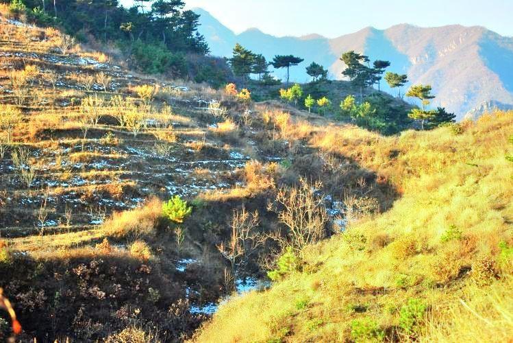 八仙山自然保護區
