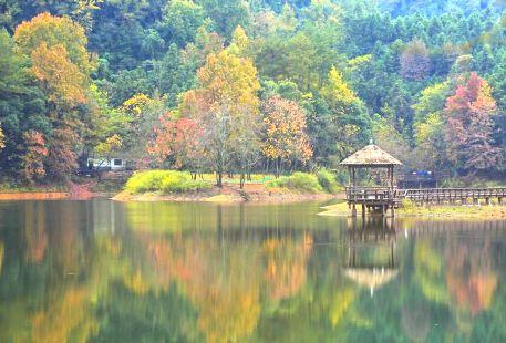 千島湖龍川灣