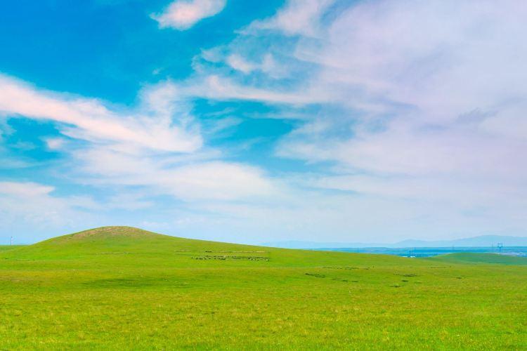 金銀灘草原