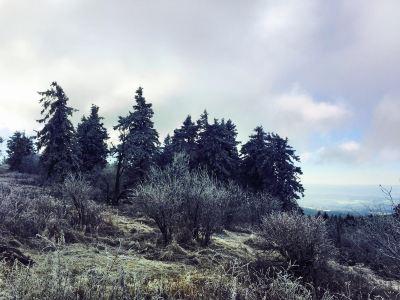 Feldberg Mountain