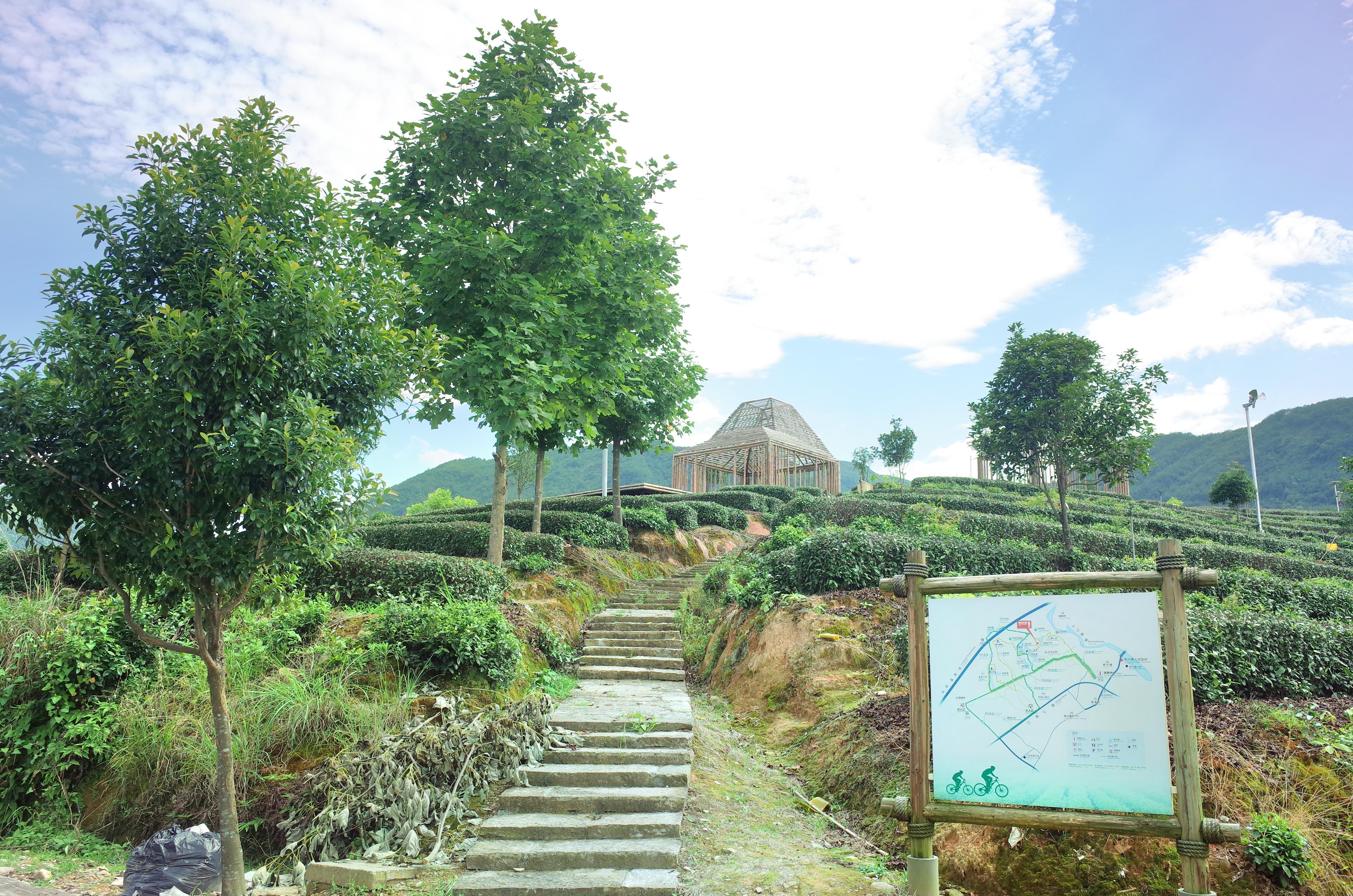 Songyang Damushan Cycling and Tea Garden Scenic Area