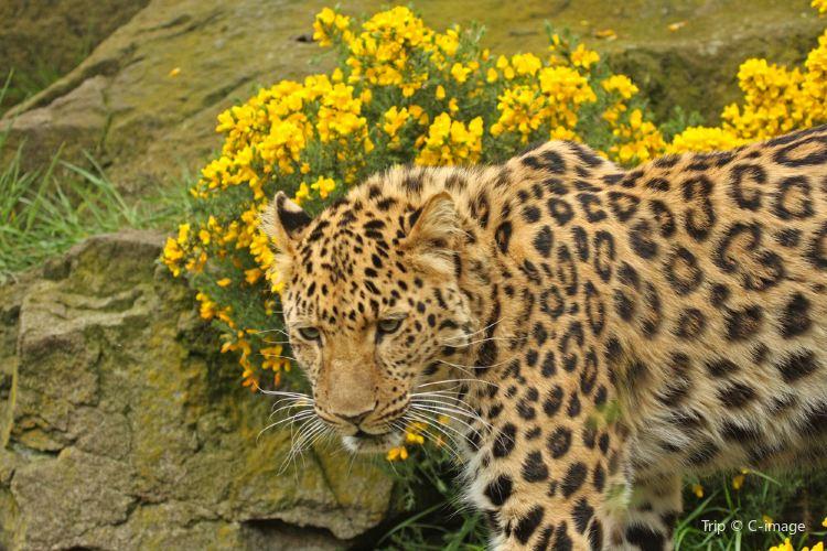 Edinburgh Zoo1